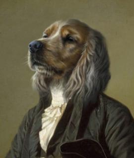 Têtes de chiens